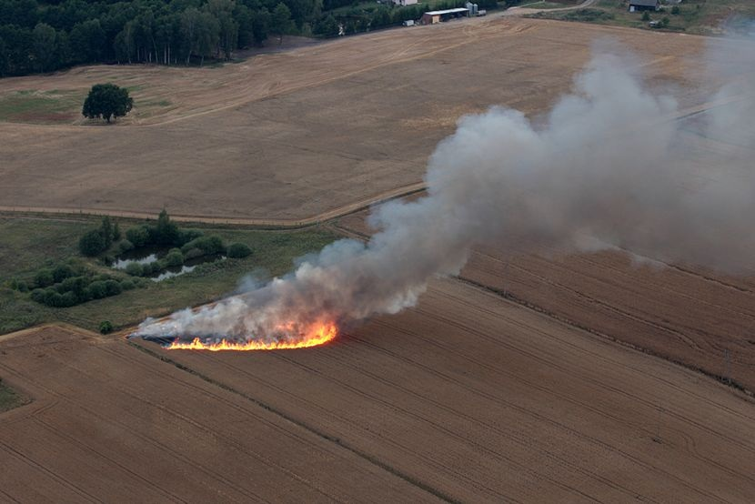 Tczew Zaprószenie Ognia W Rokickim Lesie Spłonął Blisko Hektar